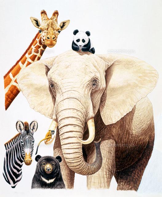 スーパーリアル 動物達[02237006924]の写真素材・イラスト素材