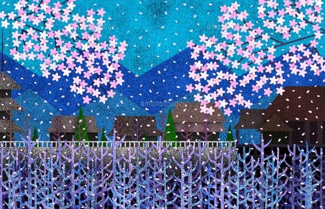 風景画 京都清水寺の春の桜吹雪の風景02237013007の写真素材イラスト