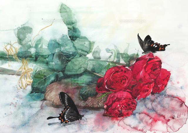 巨大な赤い薔薇「クワトロッソ」...