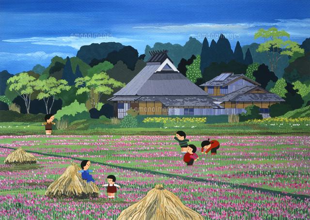 春の田んぼでレンゲ摘みをする子供たち 02237013196 の写真素材