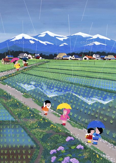 雨のなか田んぼ道を歩く子どもたち 02237013451 の写真素材 イラスト