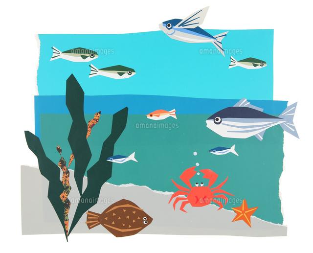 魚 海藻 カニなど海の生き物02237013773の写真素材イラスト素材