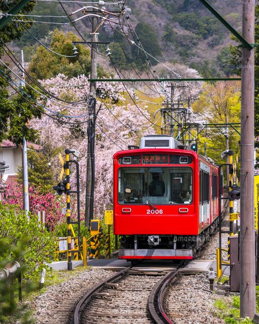 桜と箱根登山鉄道02328002236の写真素材イラスト素材アマナイメージズ