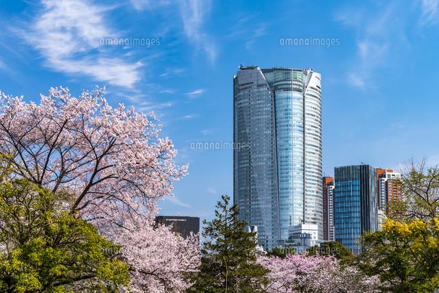 桜と六本木ヒルズ02328004507の写真素材イラスト素材アマナイメージズ