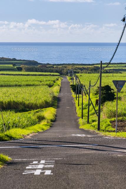 サトウキビ畑と坂道02328004874の写真素材イラスト素材アマナ
