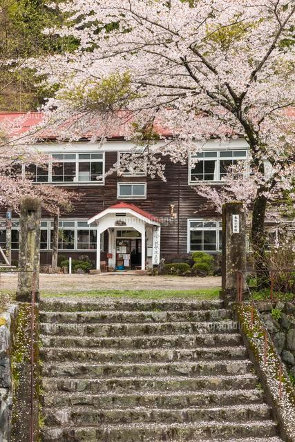 桜咲く木造小学校校舎02335002836の写真素材イラスト素材アマナ