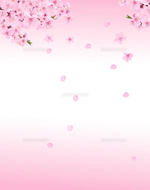 桃の花02413000006の写真素材イラスト素材アマナイメージズ