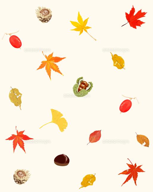 もみじと秋の実り02413000064の写真素材イラスト素材アマナイメージズ