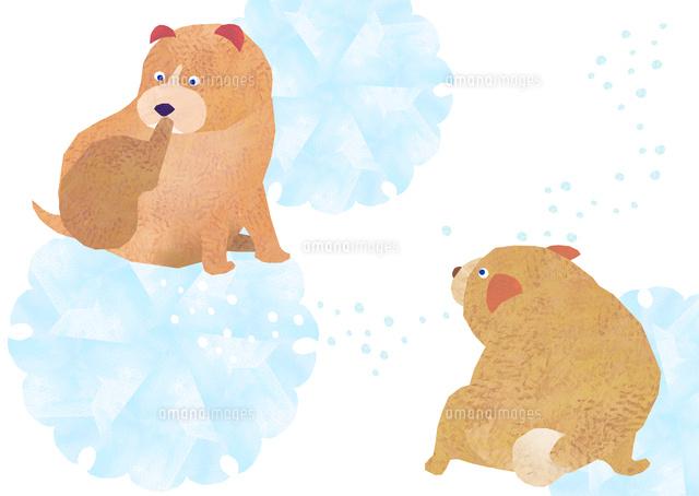 雪とかわいい柴犬02671000132の写真素材イラスト素材アマナイメージズ