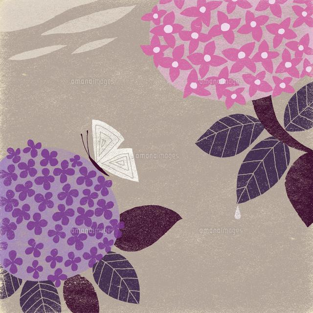紫陽花と蝶02679000018の写真素材イラスト素材アマナイメージズ