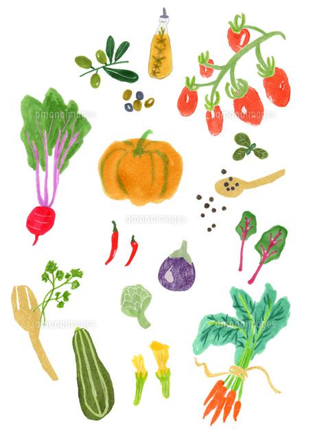 西洋野菜イラスト02791000001の写真素材イラスト素材アマナイメージズ