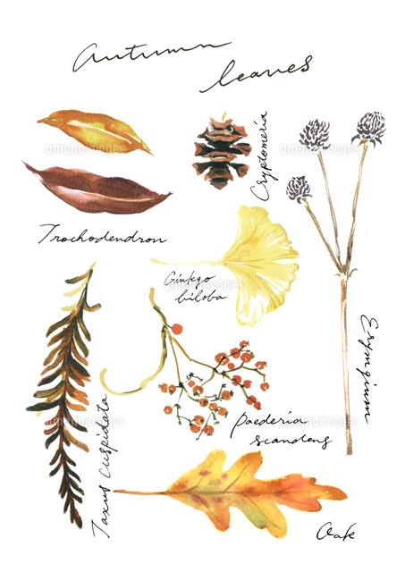 秋の植物02837000757の写真素材イラスト素材アマナイメージズ