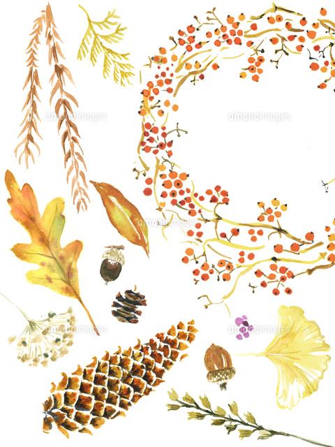 秋の植物02837000820の写真素材イラスト素材アマナイメージズ