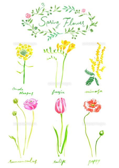 春の植物花02837000821の写真素材イラスト素材アマナイメージズ