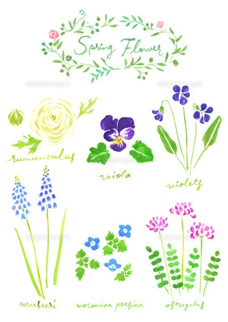 春の植物花02837000822の写真素材イラスト素材アマナイメージズ
