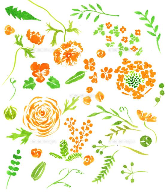 春の植物花02837000843の写真素材イラスト素材アマナイメージズ