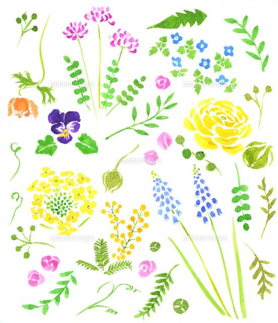 春の植物花02837000847の写真素材イラスト素材アマナイメージズ