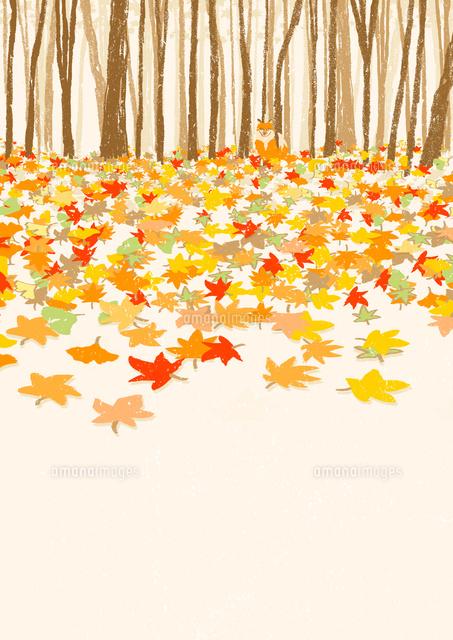 落ち葉と狐02837000937の写真素材イラスト素材アマナイメージズ