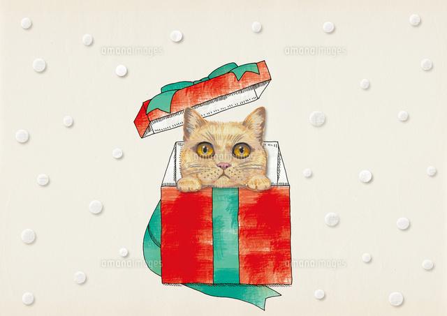 プレゼントボックス流に入る猫02837001240の写真素材イラスト素材