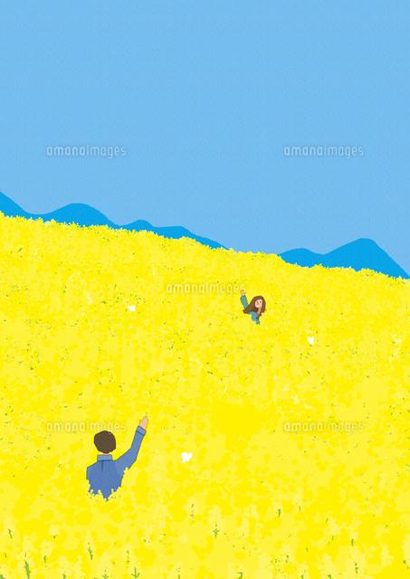 菜の花畑でデートをするカップル02837001288の写真素材