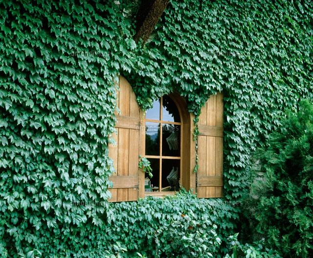 ツタに覆われた家の木枠の窓[200...