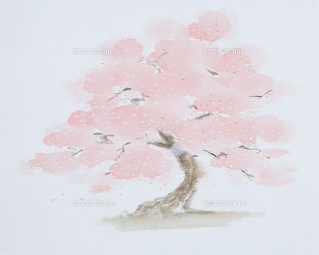 桜の木のイラスト20014003129の写真素材イラスト素材アマナイメージズ
