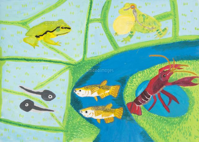 田んぼ溜池にすむ生き物 20020001240 の写真素材 イラスト素材
