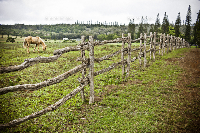 Horse in grassy field and wooden fence island of lanai hawaii horse in grassy field and wooden fence island of lanai hawaii voltagebd Images