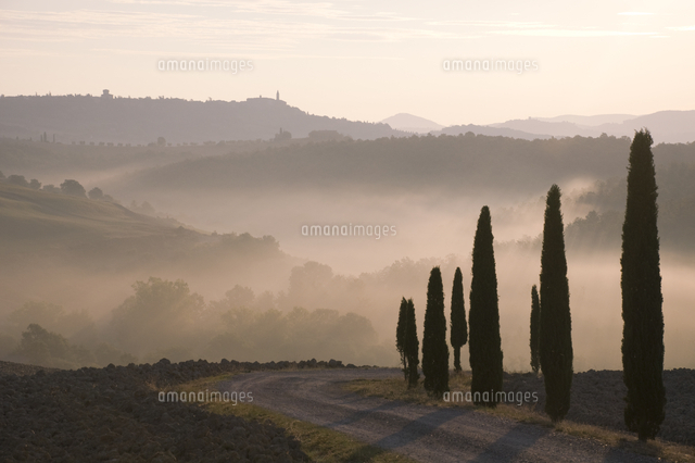 Early morning mist and cypress...