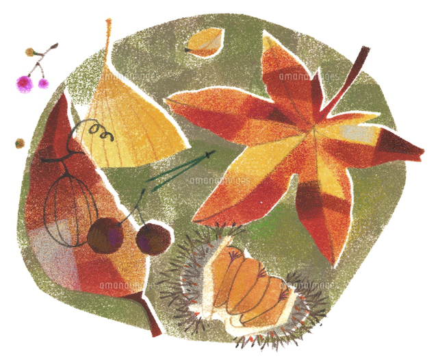 落ち葉や木の実のイメージ20037008046の写真素材イラスト素材