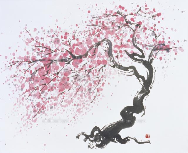 桜 水墨画20037008692の写真素材イラスト素材アマナイメージズ
