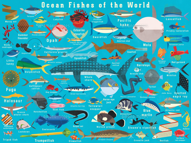 illustration of lots of ocean fish from around the world 20039010159