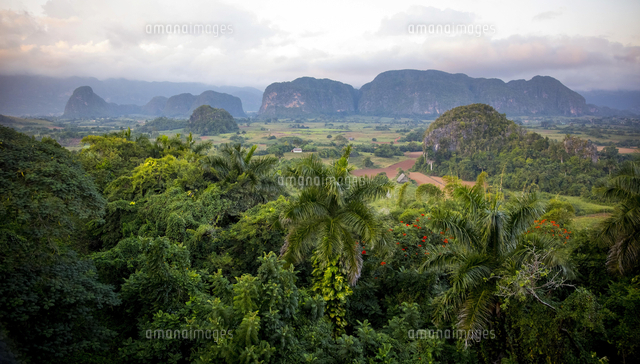 vinales valley with karst mountains vinales pinar del 20080000835