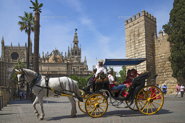 horse drawn carriage at plaza del triunfo seville andalusia spain