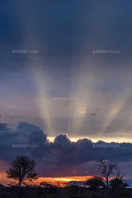 Africa, Zimbabwe, Hwange National Park.  Sunbeams burst out above cumulus clouds at sunset
