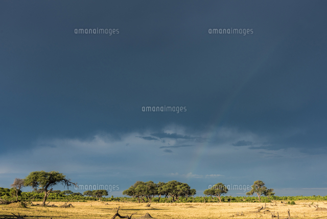 Africa, Zimbabwe, Hwange National park.  Rainbow after a thunderstorm in wet season.