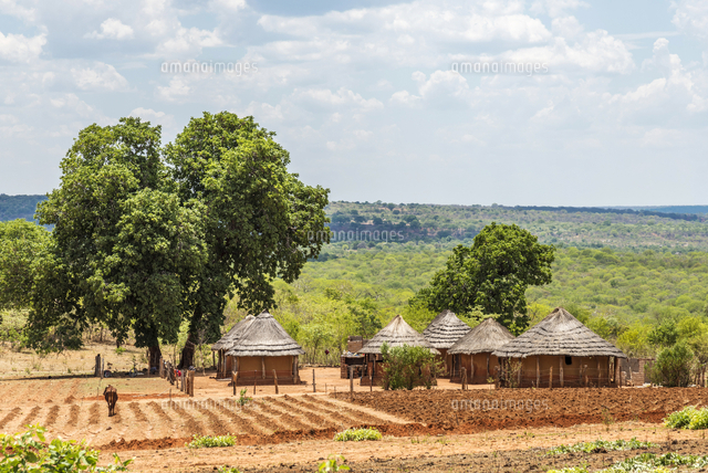 Africa, Zimbabwe, Matabeleland north. A traditional rural homestead.