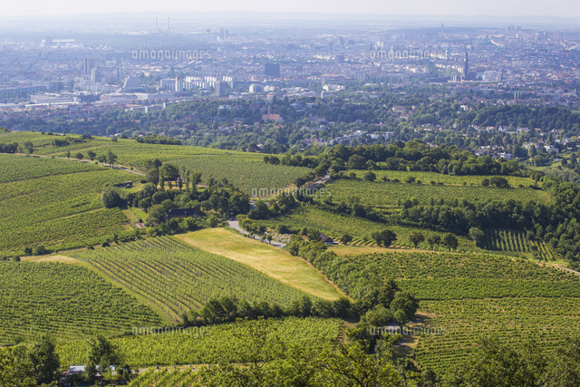 Austria, Vienna, View of vineyards and Vienna