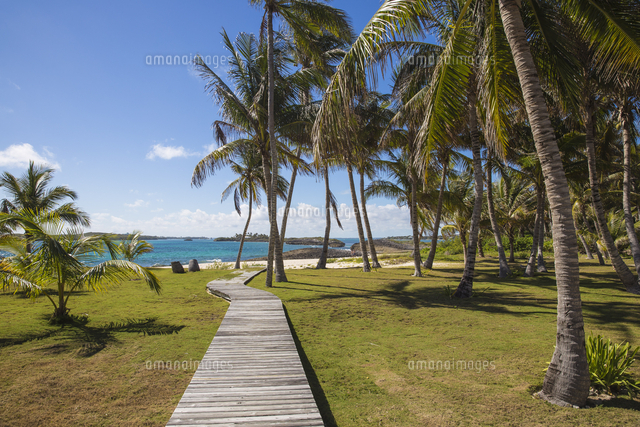 Bahamas, Abaco Islands, Elbow Cay, Coconut grove near Tihiti beach