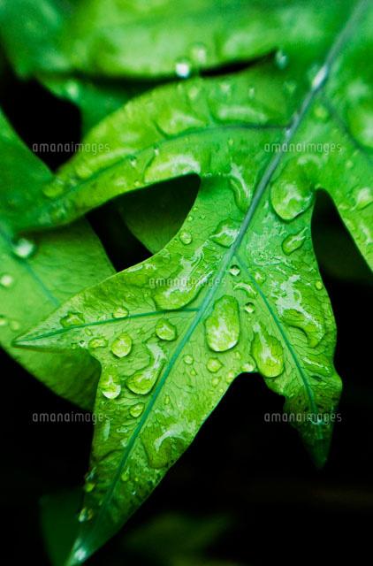 fern with rain drops 22157010998 写真素材 ストックフォト 画像