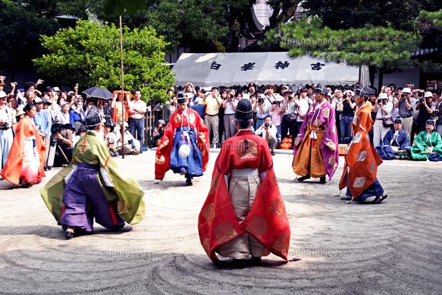 京都府 白峯神宮 蹴鞠の奉納22456003232の写真素材イラスト素材