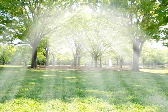新緑と朝の光[22481000758]| 写...