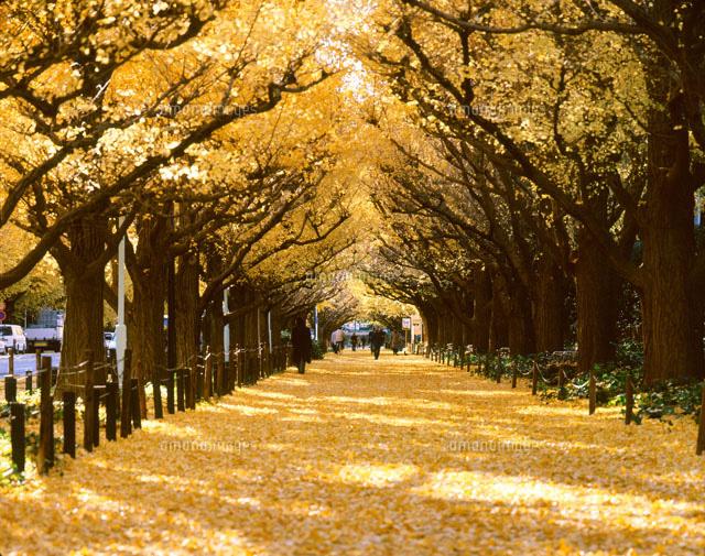 「神宮外苑前いちょう並木」の画像検索結果