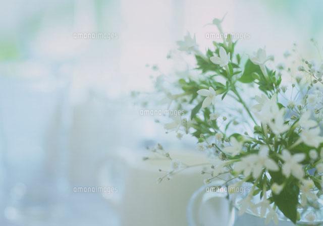 ブバリアとかすみ草22709000379の写真素材イラスト素材アマナ