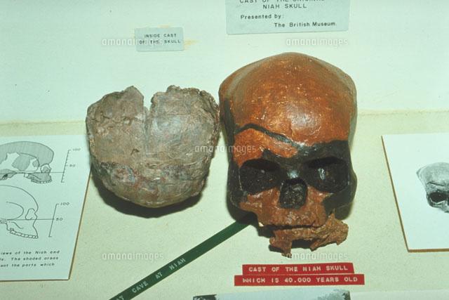 ニア洞窟の約4万年前の頭蓋骨[23...