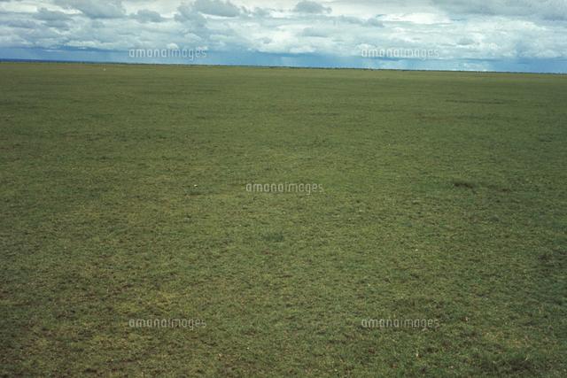 アフリカの植物(草原の植生)[23018053793]の写真素材・イラスト素材 ...