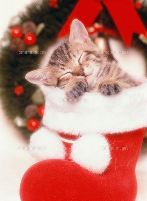 眠るネコ クリスマス25010000322の写真素材イラスト素材アマナ