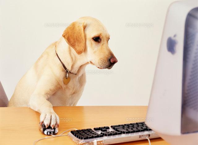 パソコンと犬 に対する画像結果