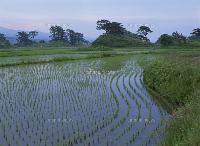 水田と朝の象潟九十九島