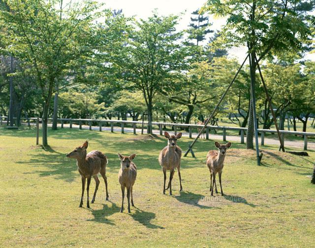 公園 奈良市